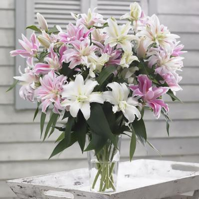 Lily Bulbs (Double) - Pastel Mix