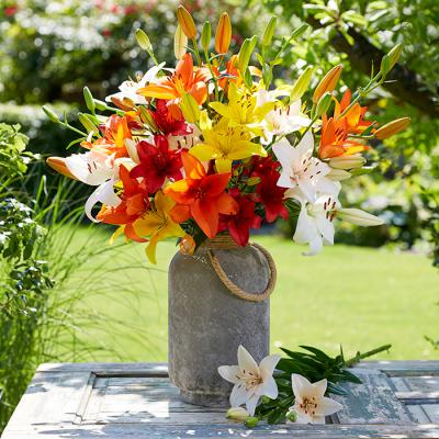 Lily Bulbs (Asiatic) - Mix